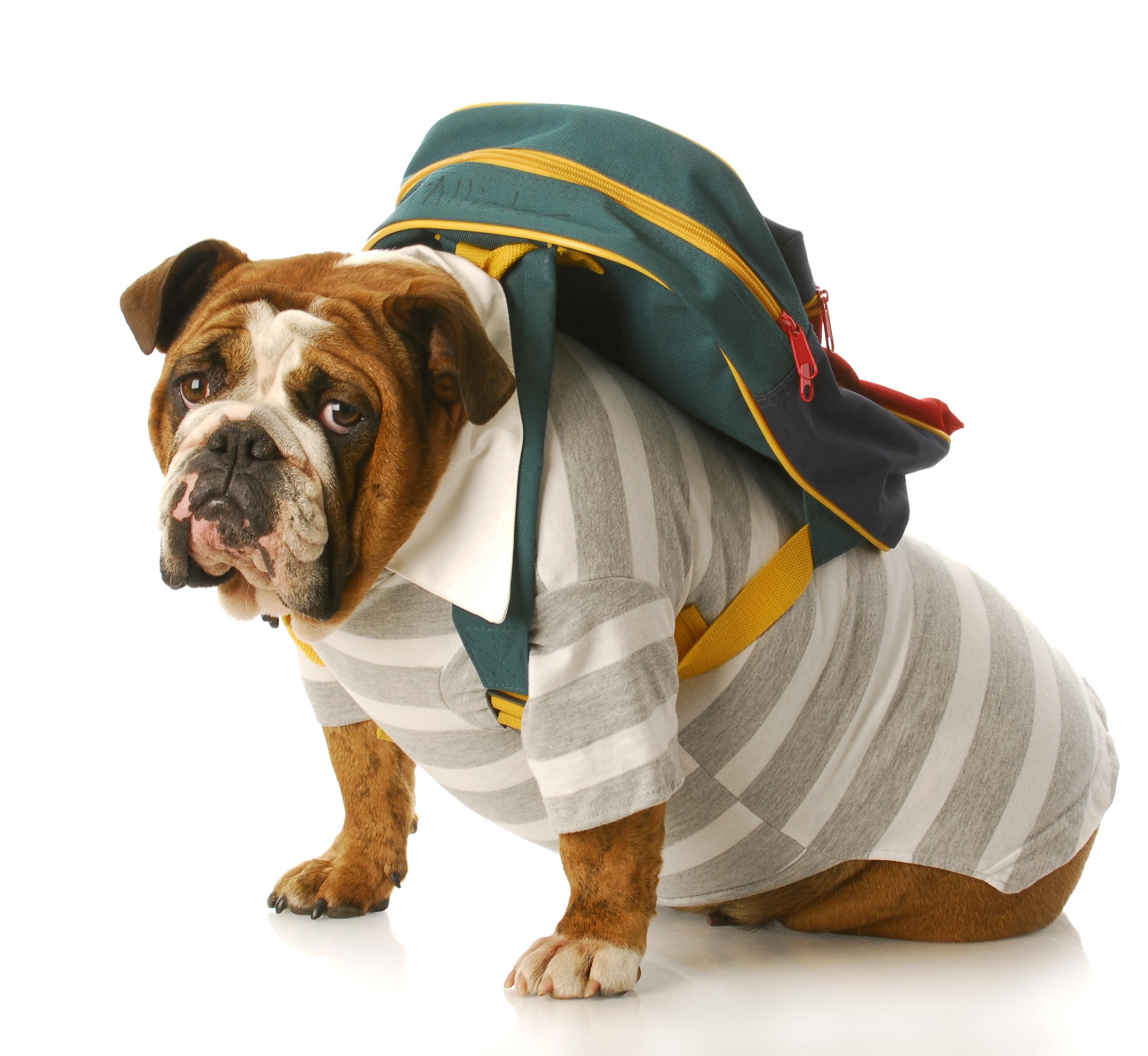 cachorro viagem