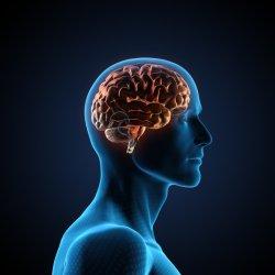 OnStartups Human Brain