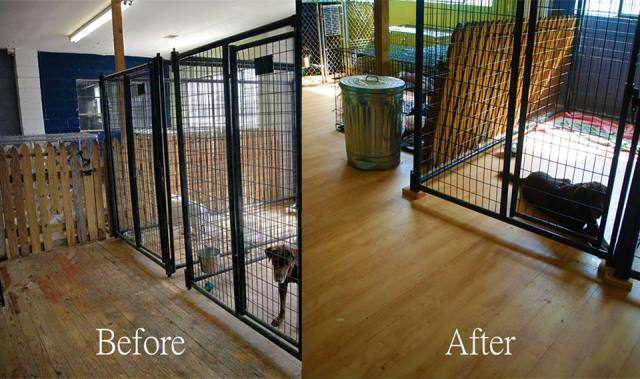 mohawk contributed vinyl flooring to the lifeline animal project doghouse renovation