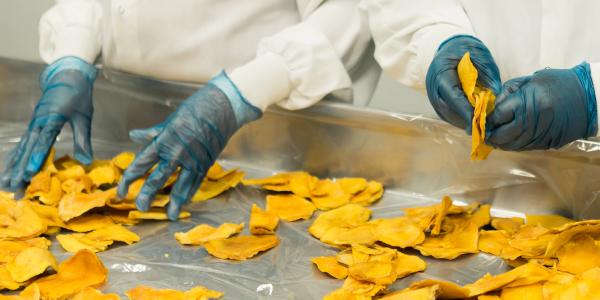 food manufacturing dried mango