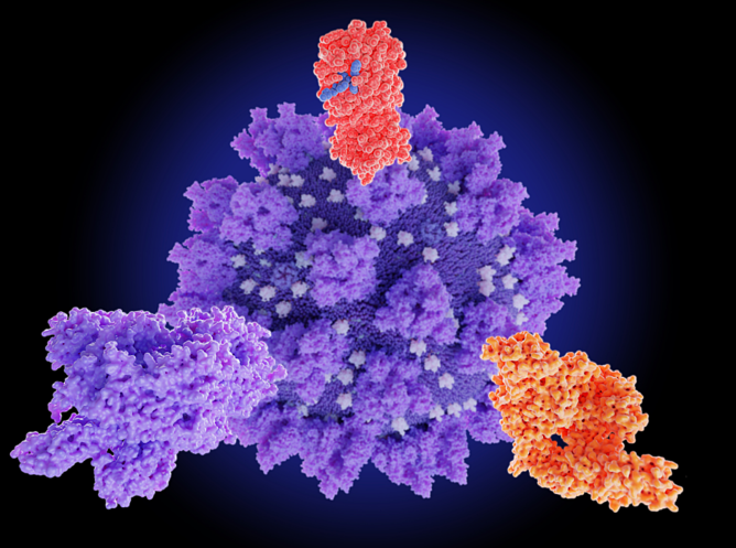 RNase and virus inactivation