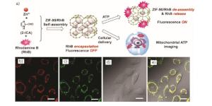 Application_nanoscale_MOF_Imaging_Agents_WEB