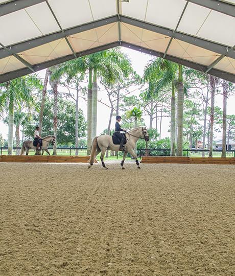 Gallery-Equestrian-Silver-Drache-460x540