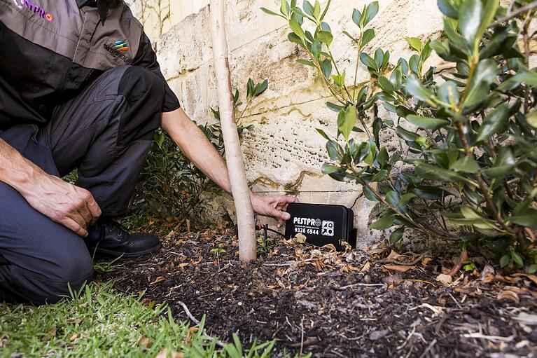 Tips on Preventing Springtime Pests From Invading Your Property