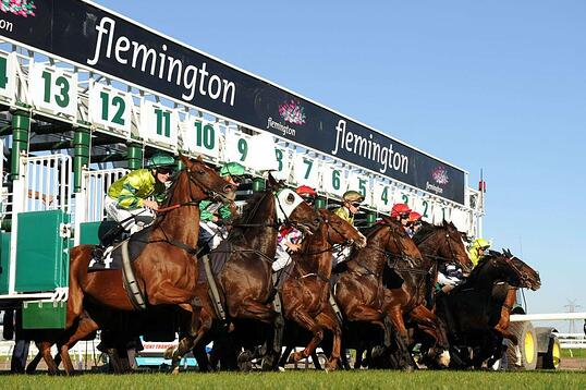melbourne cup horse race starting gates