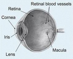 Keratoconus corneal eye disease eye diagram showing the cornea the location of keratoconus eye problems ccuart Gallery