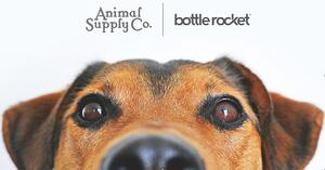 Behind the Scenes: How Two North Texas Companies Are Reshaping the Pet Industry