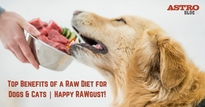 Top Benefits of a Raw Diet for Dogs & Cats | Happy RAWgust!