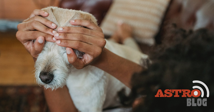 Tips for Keeping Your Pet Safe and Calm this Fourth of July